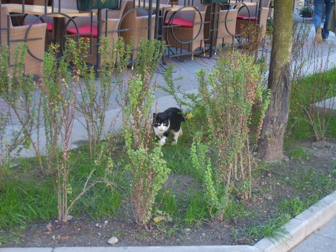 Где идет кошка?