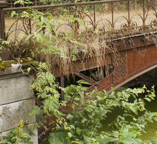 Мост в кустах. Где?