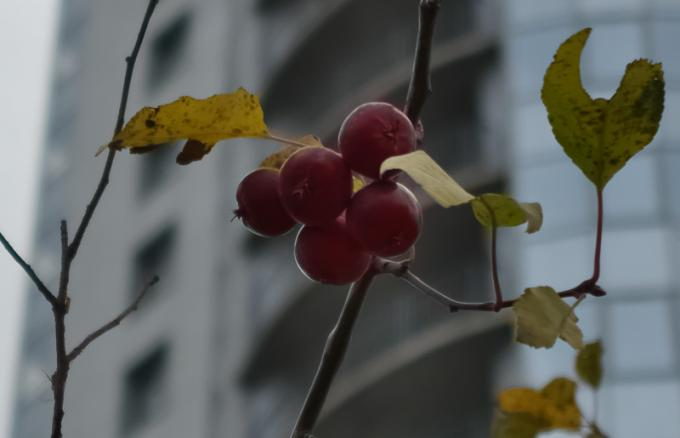 Яблоки не из сада. Где?