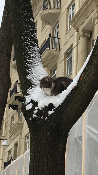Адрес котика?