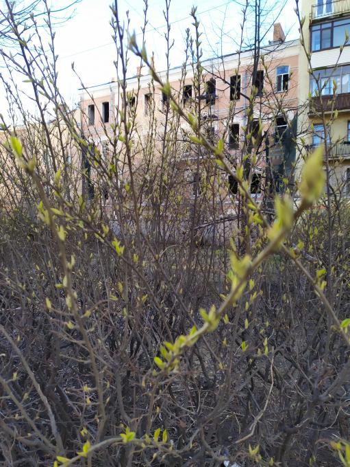 Весна идет..!